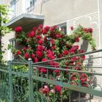 На вулиці Трояндовій